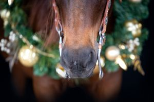 close up of horse muzzle wearing a holiday wreath