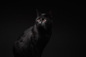 Pet portraits of cats