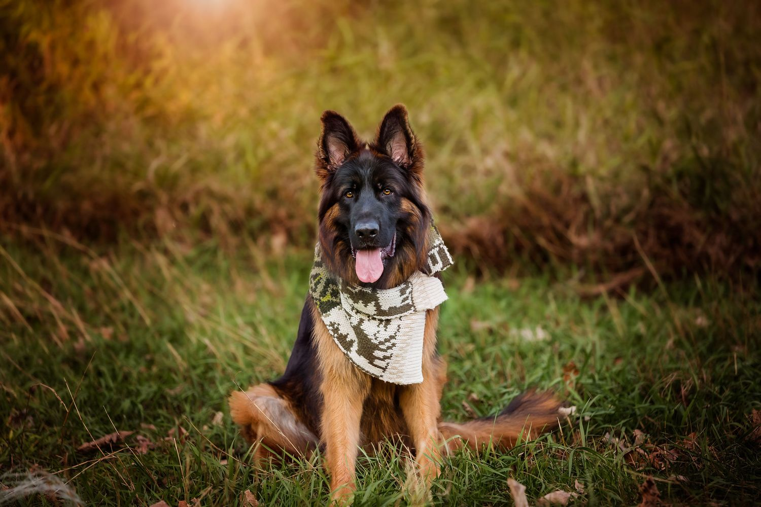 photograph of German Shepard in Omaha Nebraska