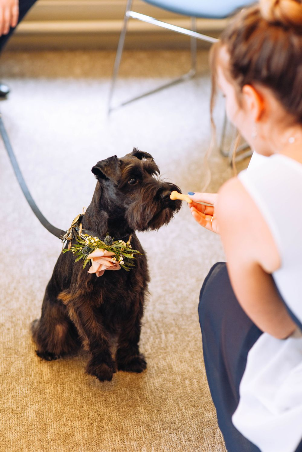 Frome Town Hall wedding by Zara Davis Photography, Gloucestershire guest and dog