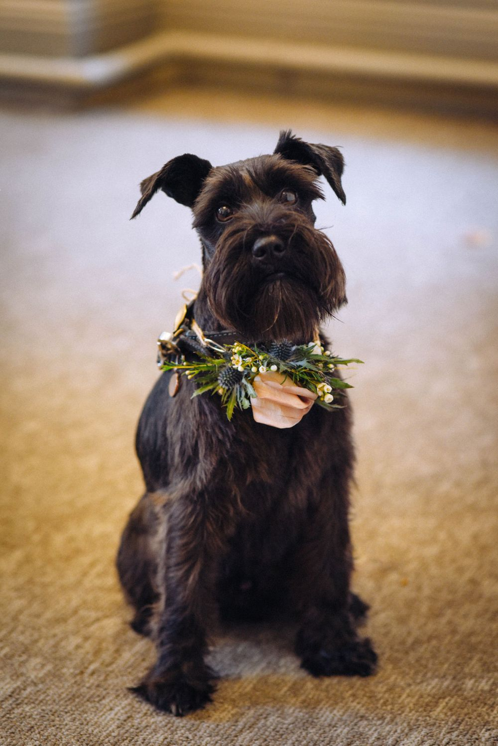 Frome Town Hall wedding by Zara Davis Photography, Gloucestershire dog with flower collar