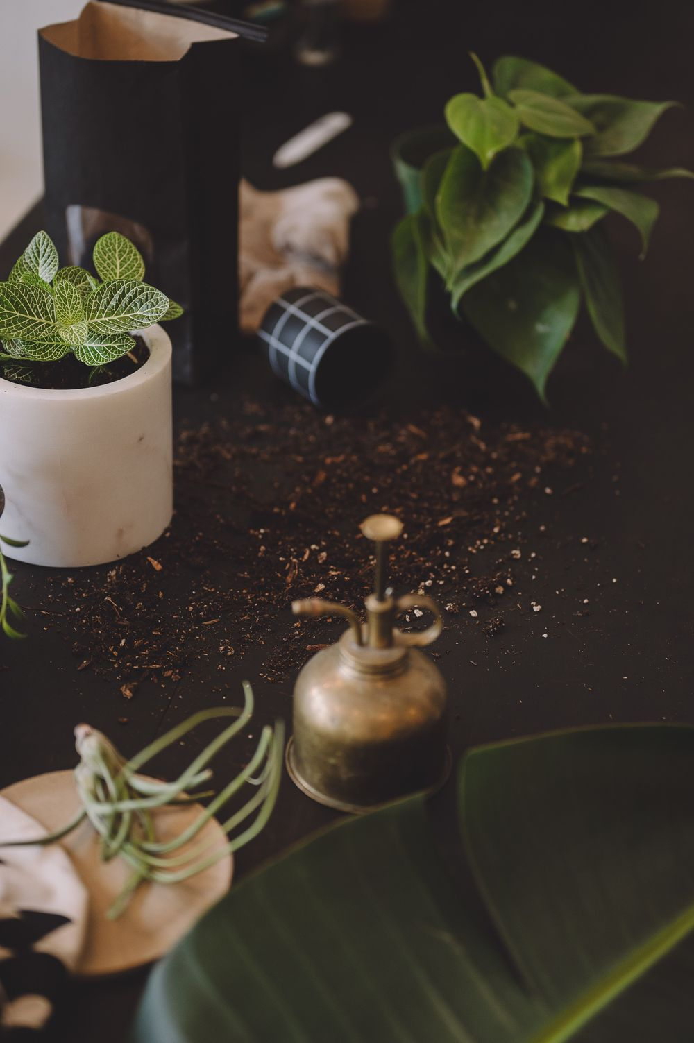 Brand photo by Tiffany Kelterer of plant potting flatlay at Belltown store Fringe in Seattle