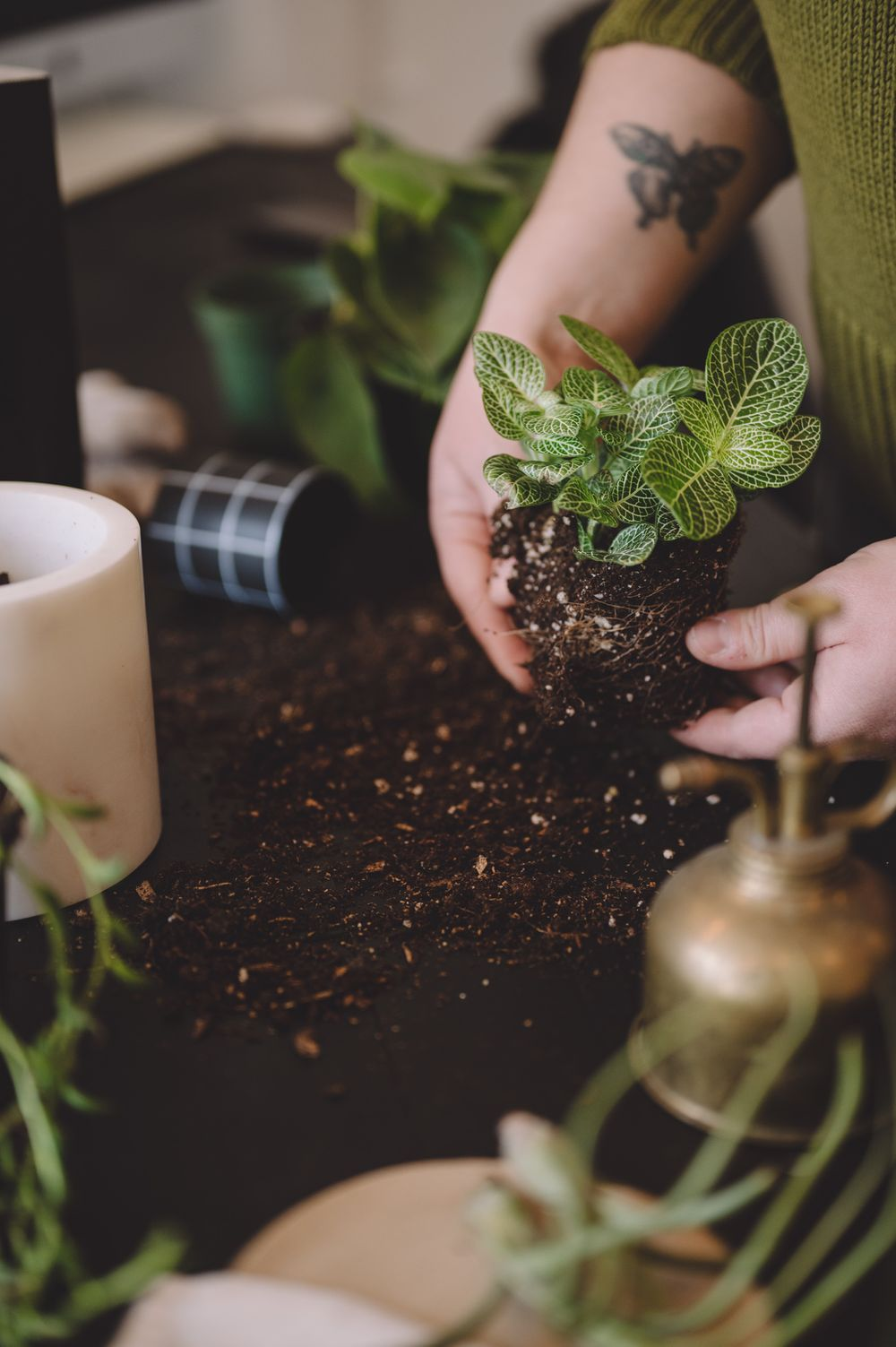 Brand photo by Tiffany Kelterer of womans hands repotting a plant at Belltown store Fringe in Seattle