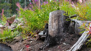 log and wild flowers