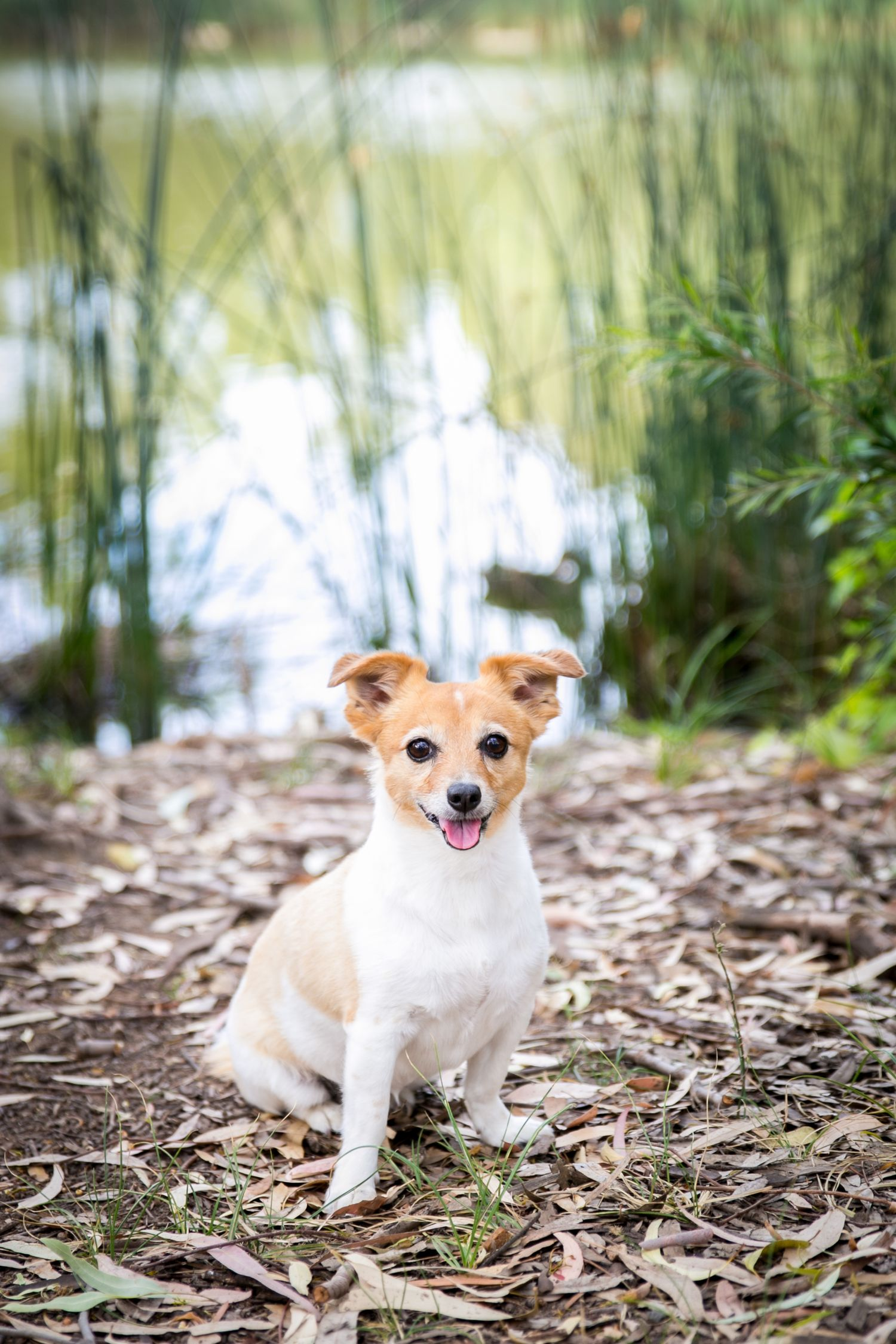 Adelaide Family Pet Photographer