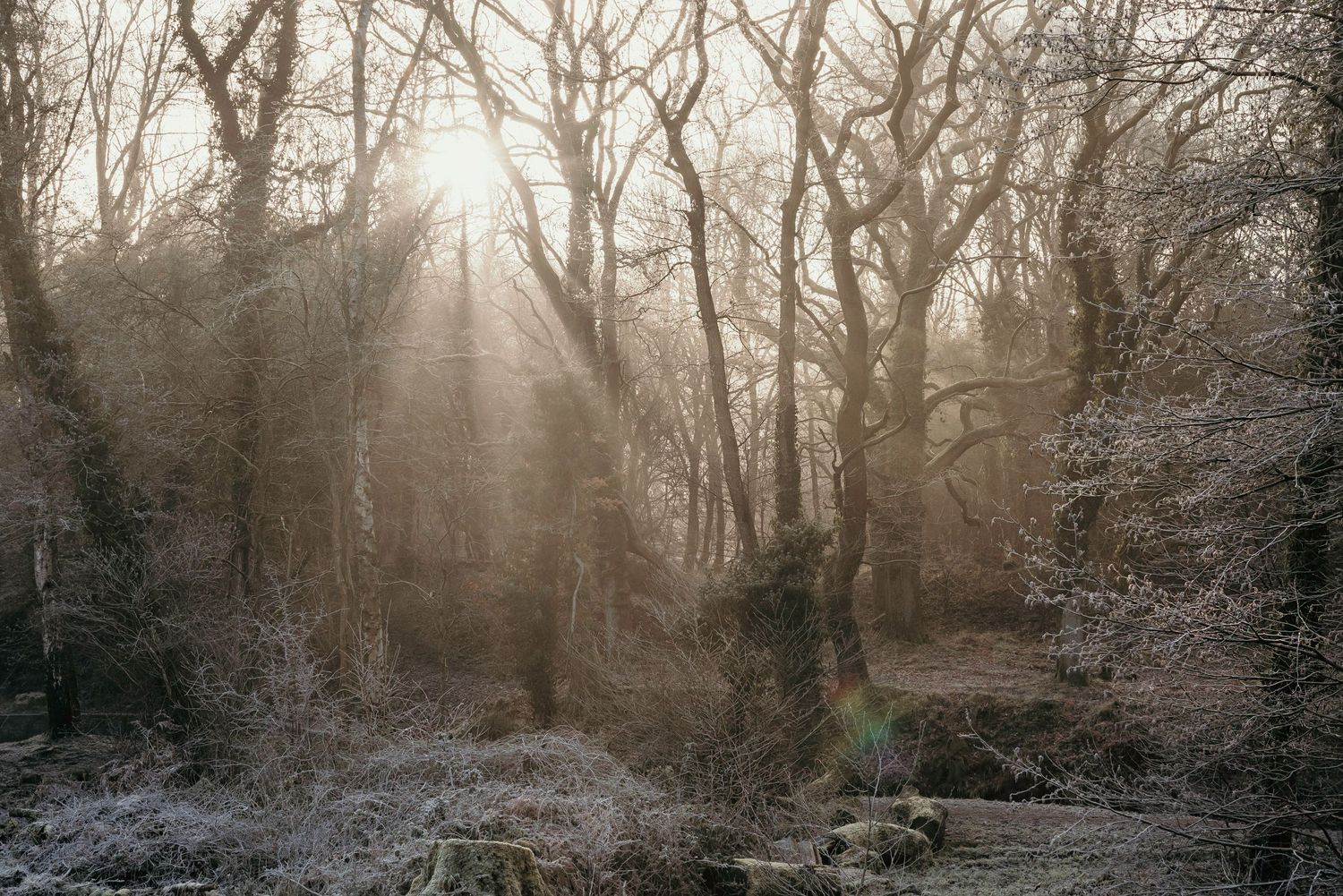 Sunlight through winter forest