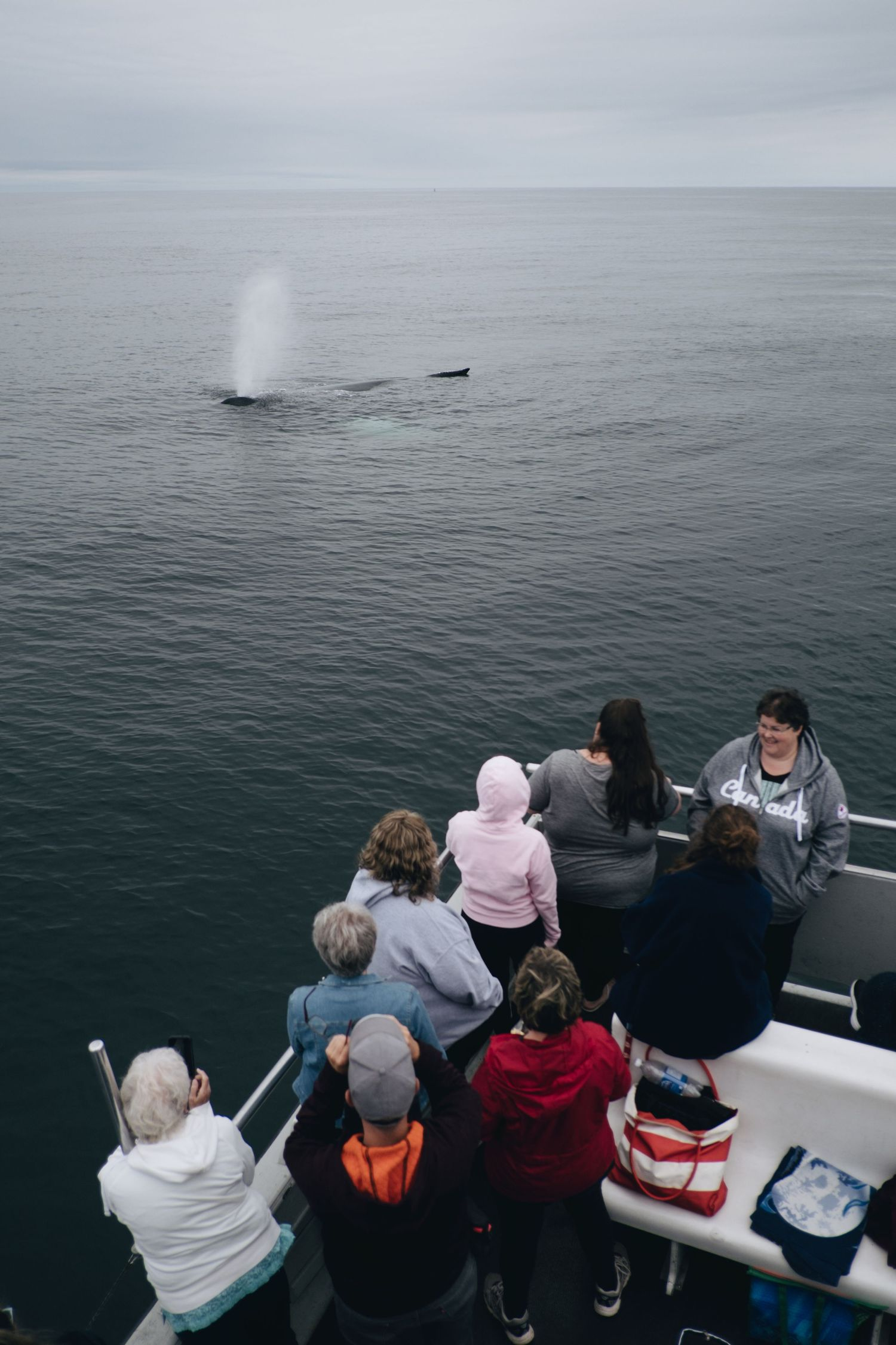 brier island whale watching sighting