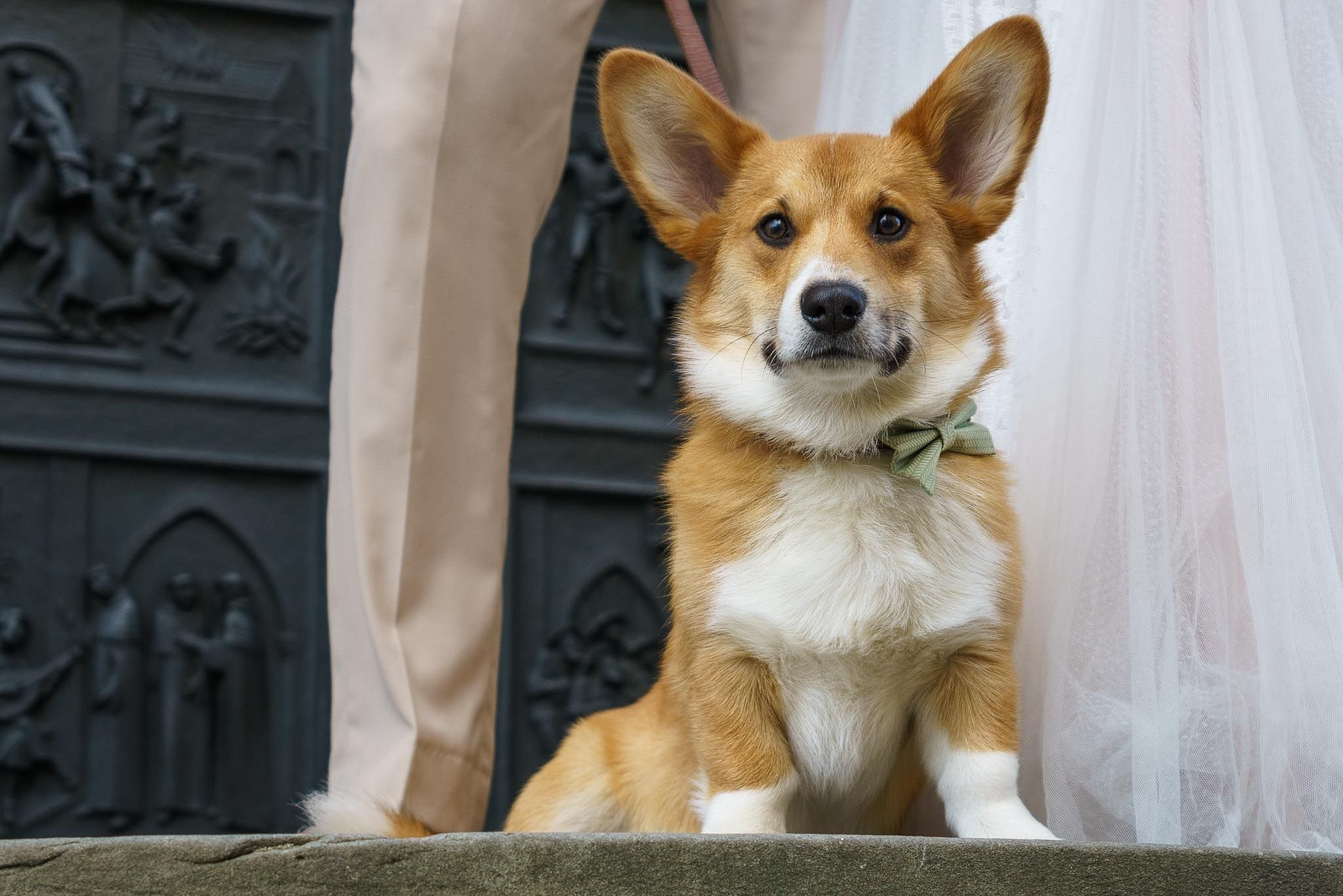 Love by HENKO - Owen the Wedding Dog - Hochzeitsfotografie