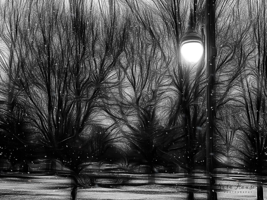 Snowy winter evening at Friendship Gardens in Plainfield Indiana with trees and lamp post