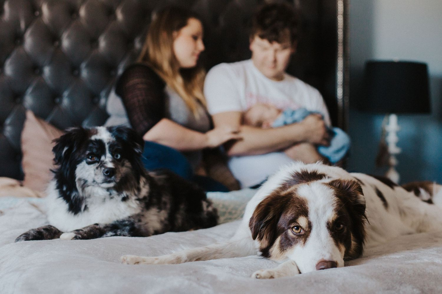 parents sit on bed looking at baby with dogs in front