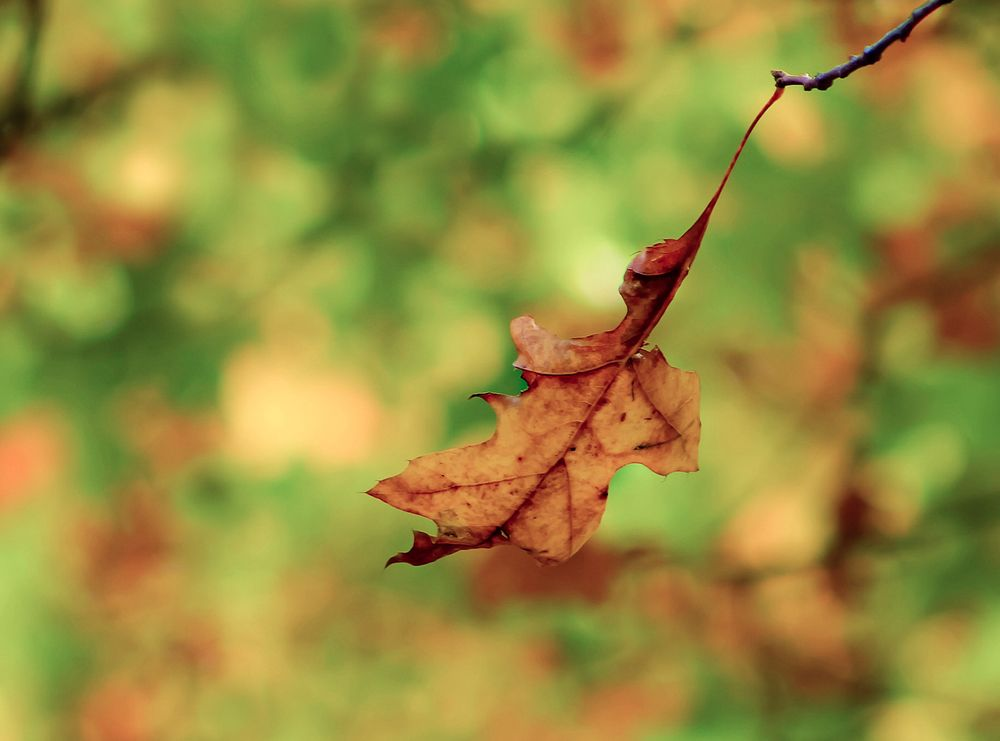 Autumn Leaf Stock Image © COPYRIGHT. 2020. Dragon Papillon Photography. All Rights Reserved.