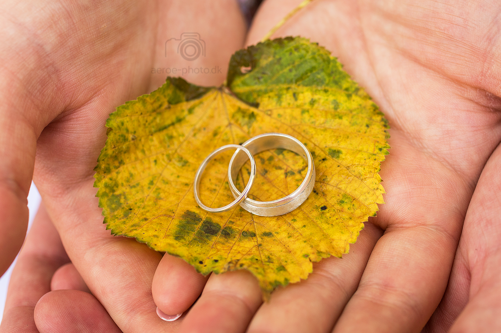 Wedding rings on a nice yellow & green autumn leaf.