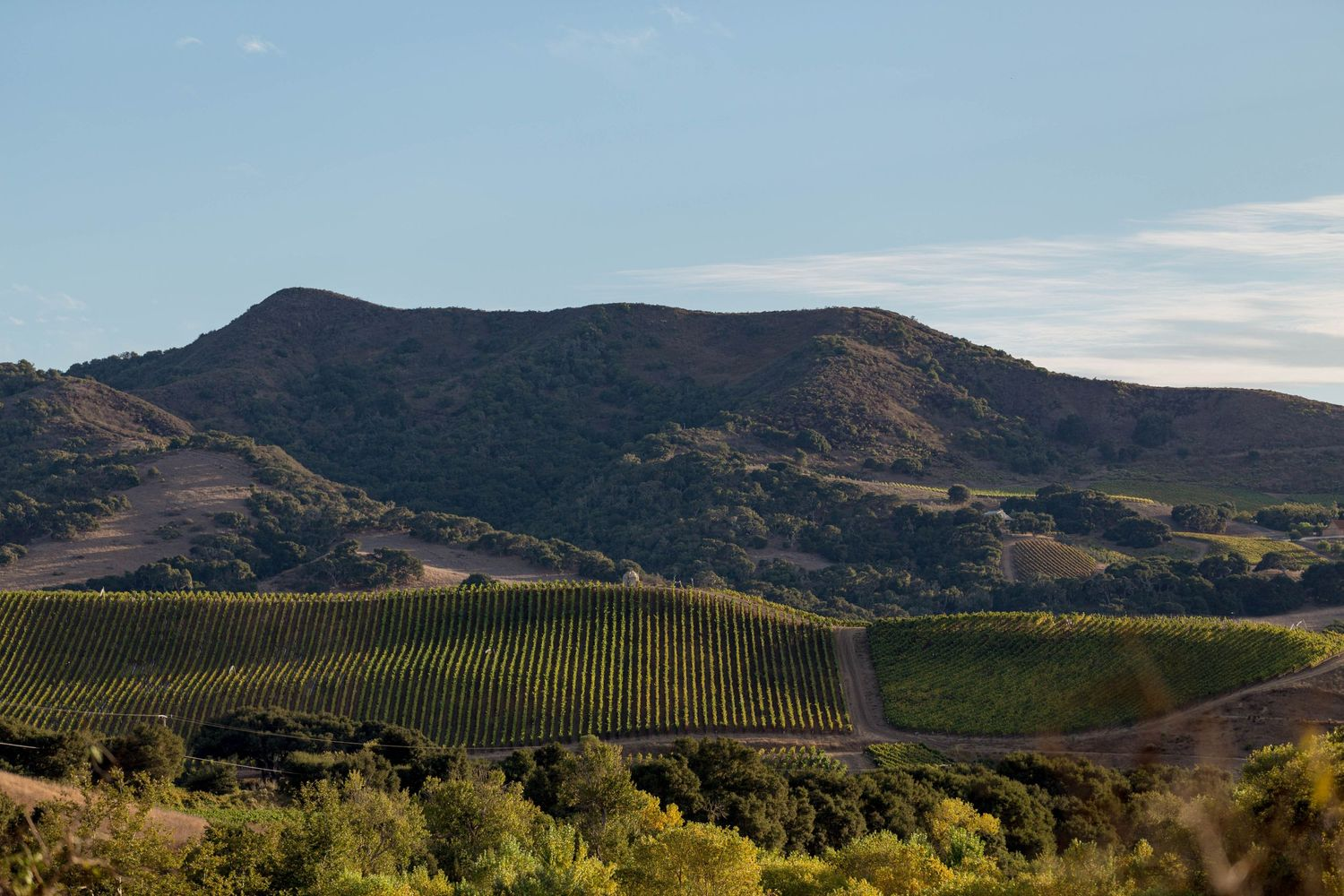 Landscape photo of Peake Ranch Vineyard in Buellton, California by Heather Daenitz of Craft & Cluster, Wine Photographer