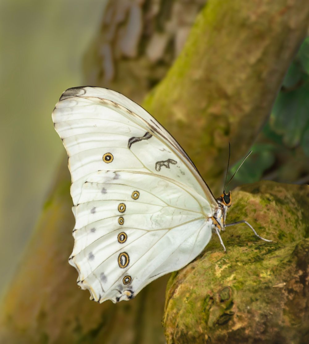 A Butterfly rests on a tree