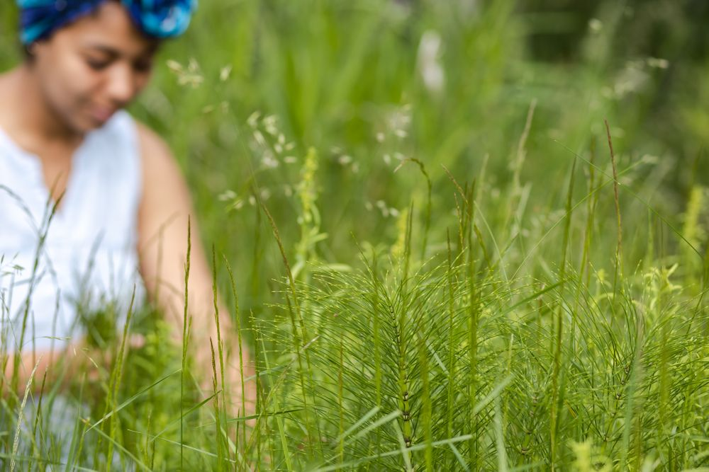 PNW Apothecary black woman small business owner harvesting horsetail in long grass