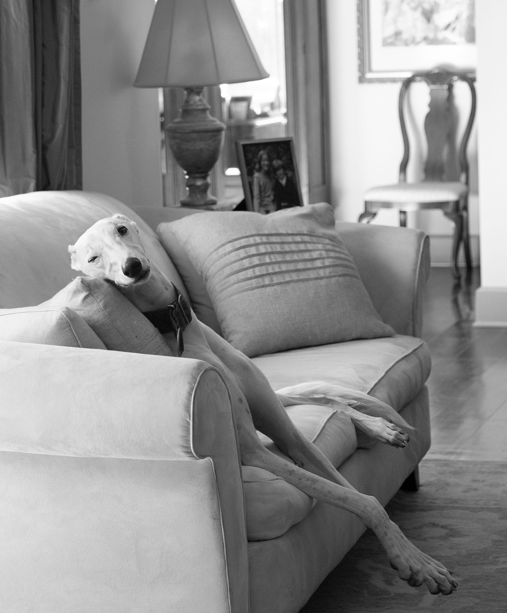 Black and White Image of White Greyhound Dog on Sofa with one eye Open by Photographer Leslie Argote