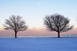 Foster Beach Winter Lakefront Trees pink and blue snow moon keri kelly photography