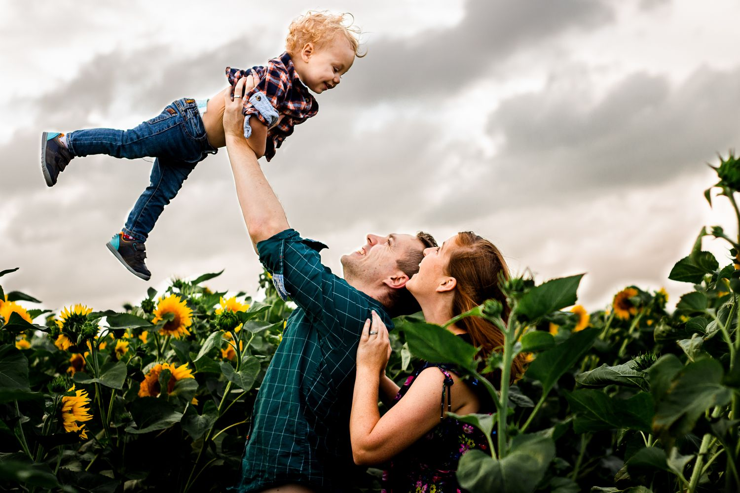 In a Sunflower field on Hayling Island parents joyfully lift their One year old Son into the overcast sky.