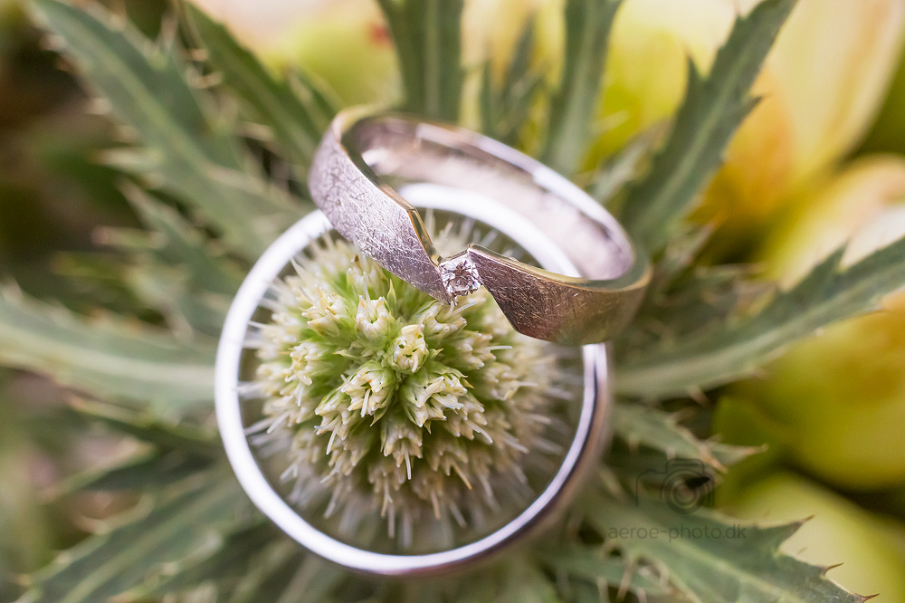 Wedding rings on a thistle on the island Ærø.