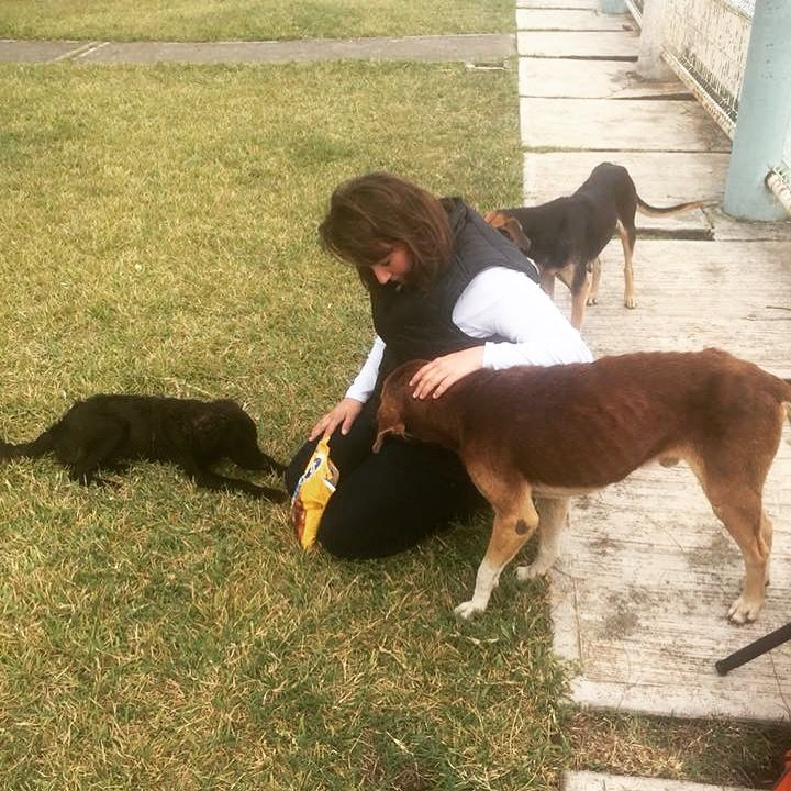Kayla og Whispering Wilds Photography feeds stray dogs in Mexico