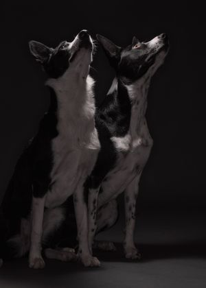 Pet groups portraits