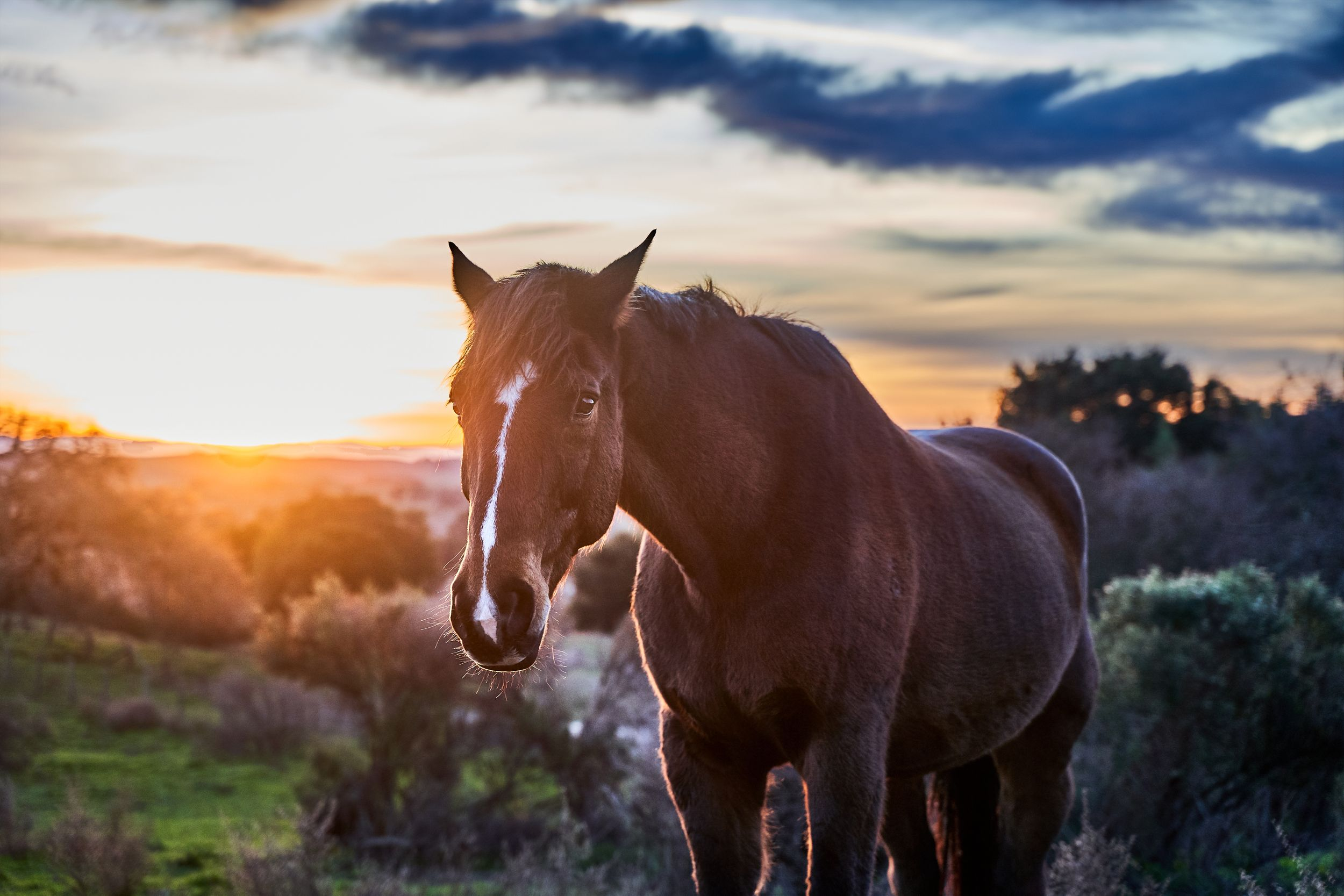 Horse at dawn in Woodside