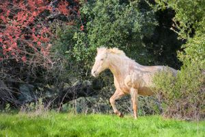 Horse at Bryne Preserve, Los Altos Hills