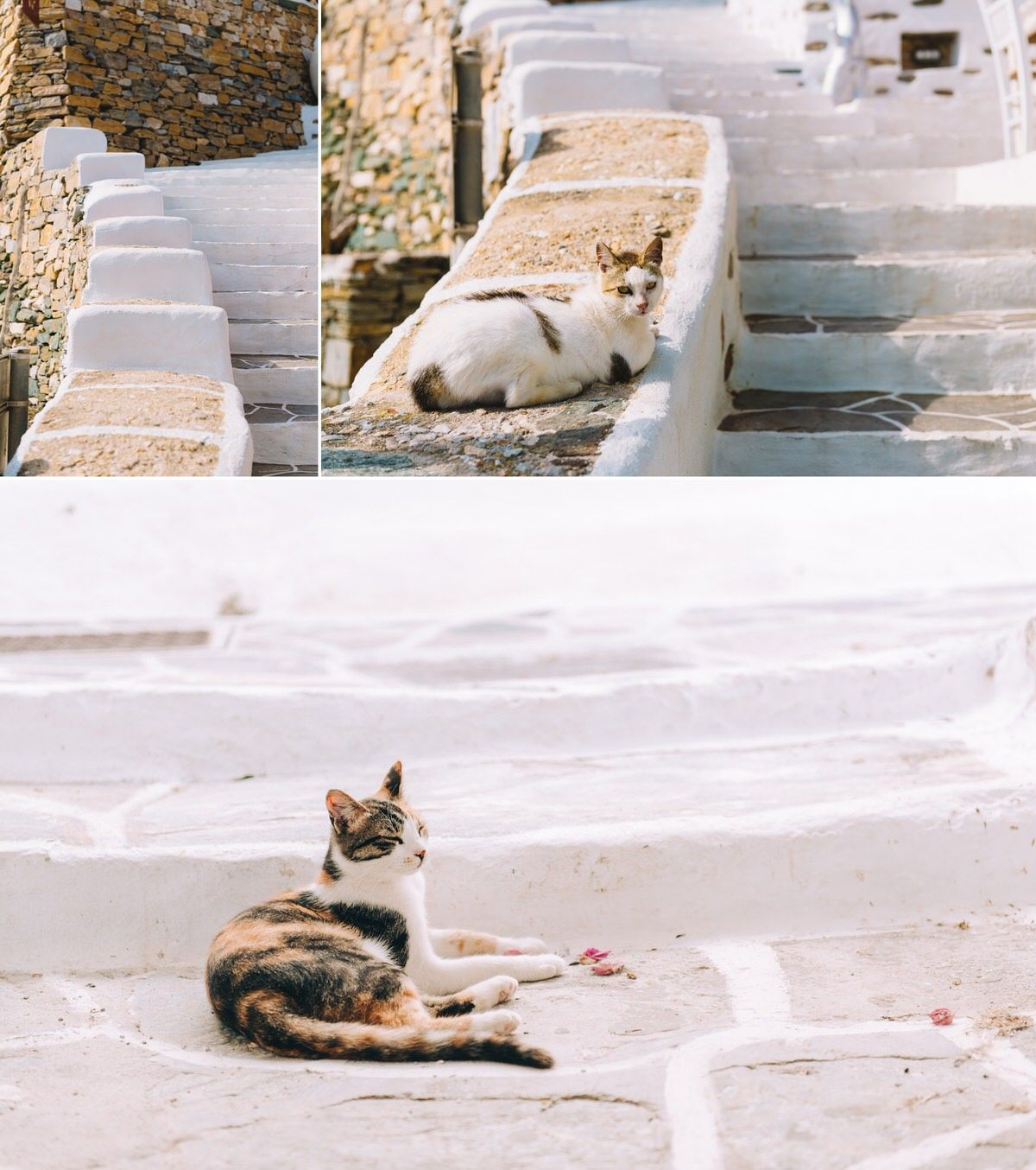 traditional greek cats at kastro in sifnos island