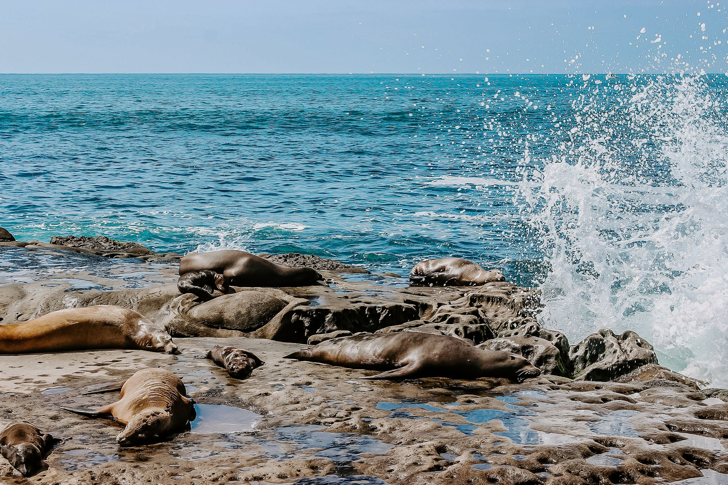 seals sitting on rocks while water splashes up near them in San Diego, adventure elopement photographer