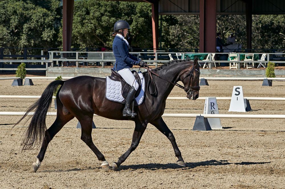 Dressage in Woodside