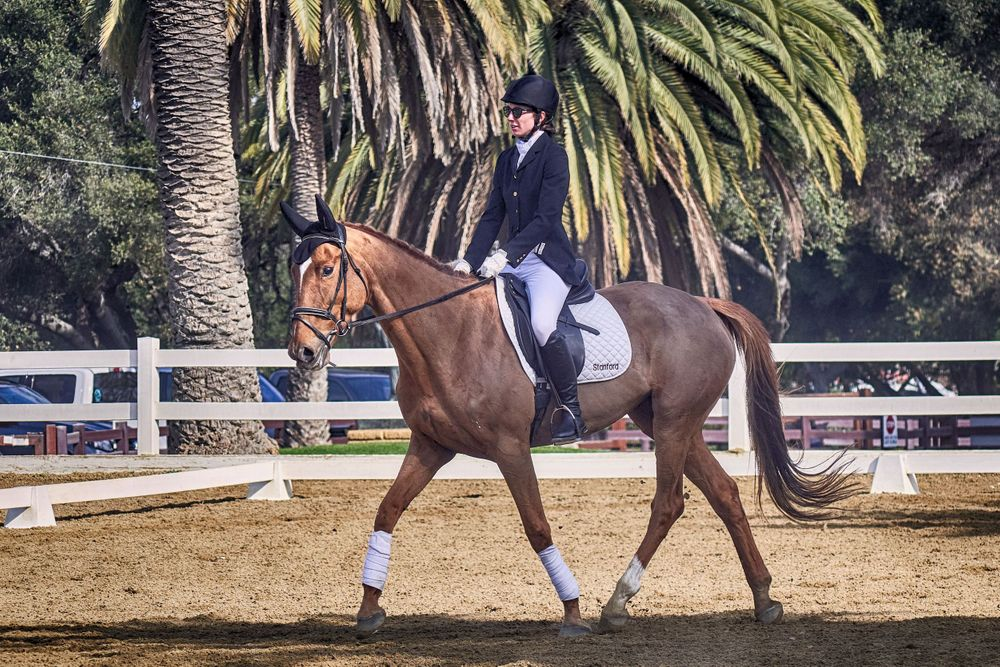 Dressage at Stanford Universuty
