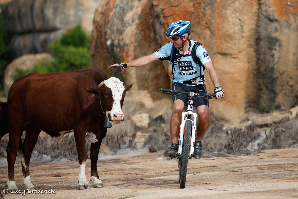 A man riding a bicycle pats a cow on the head as he rides past in Matopos, Zimbabwe, Ironwill Charity Eco Challlenge.
