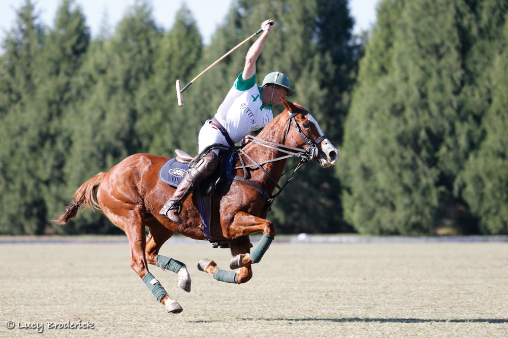 A polo player about to strike the ball with his pony in the air, Harare, Zimbabwe.