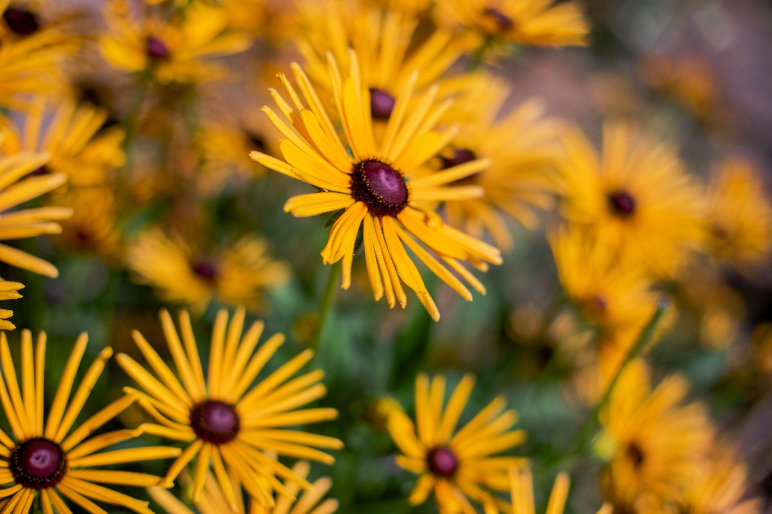 Flowers at Sierra Harvest's Food Love Farm Camp | Lenkaland Photography