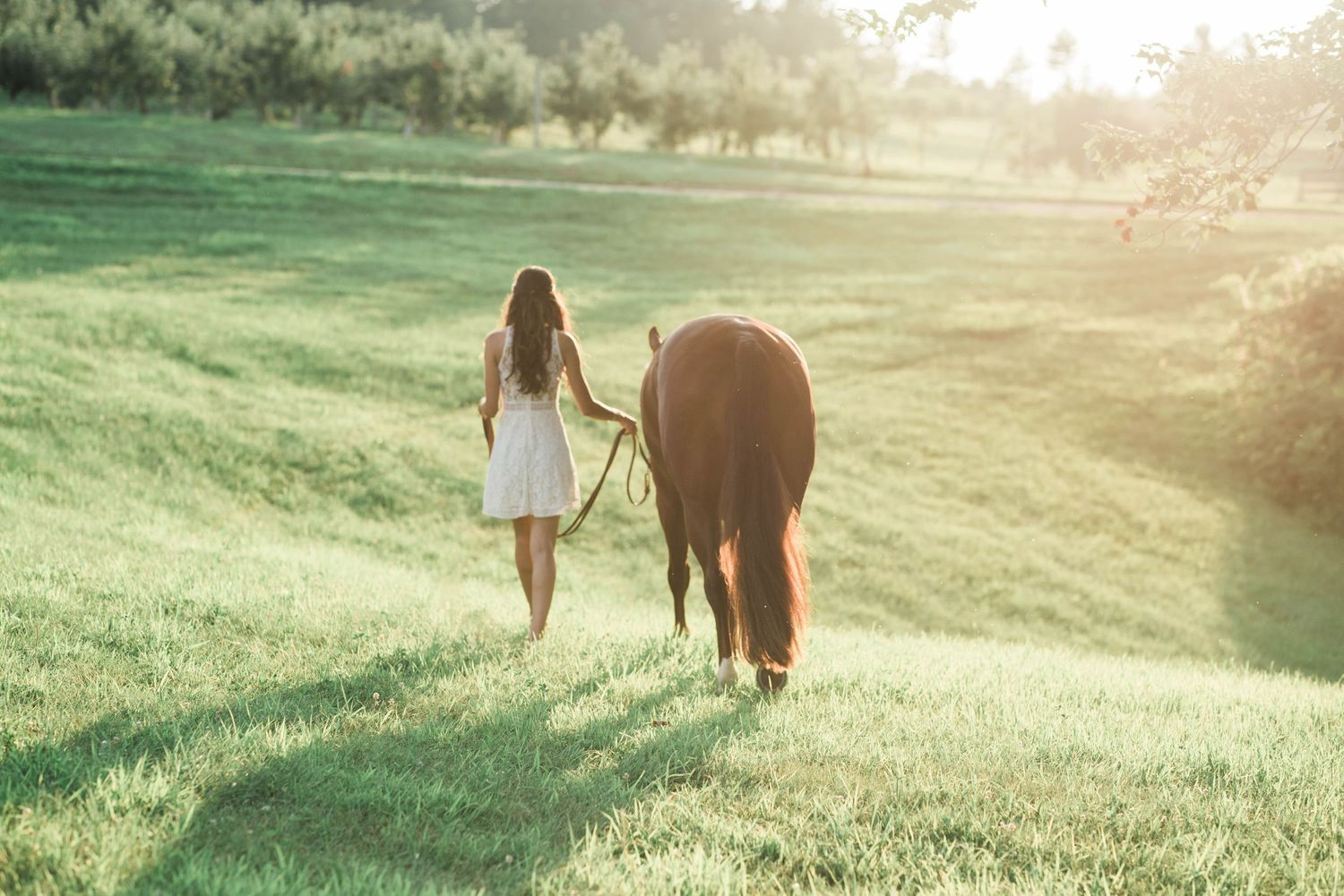 Girl with dark hair in white dress leading brown horse through a field of grass at sunset