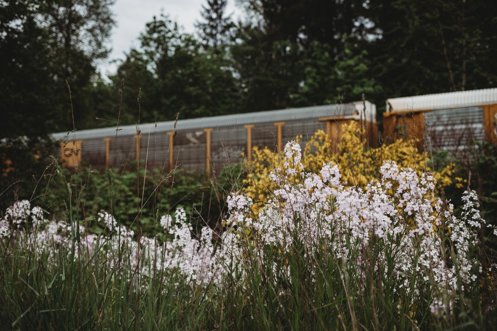 beautiful spring flowers in foreground with train in background, issaquah wa by shutterbabe snapshots