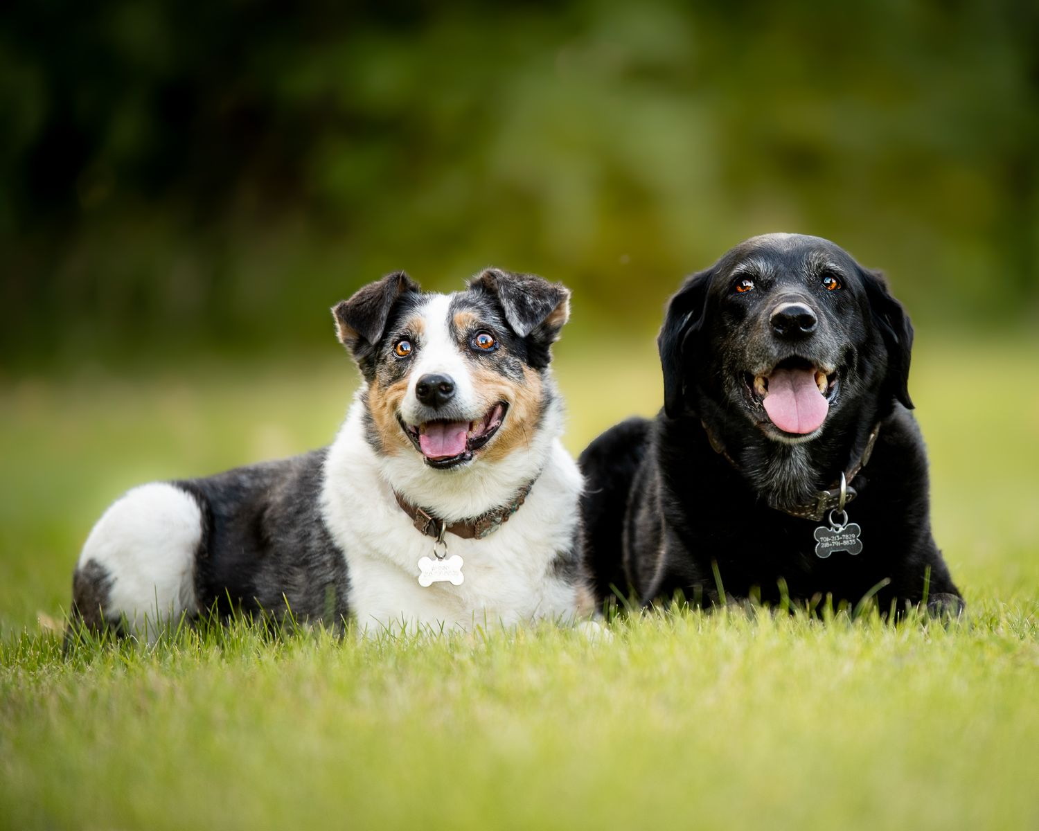 two senior dogs