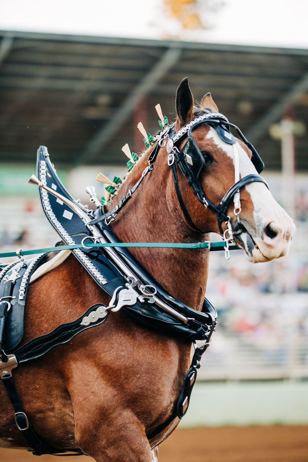 Draft Horse Classic | Lenkaland Photography at the Nevada County Fairgrounds in Grass Valley, California