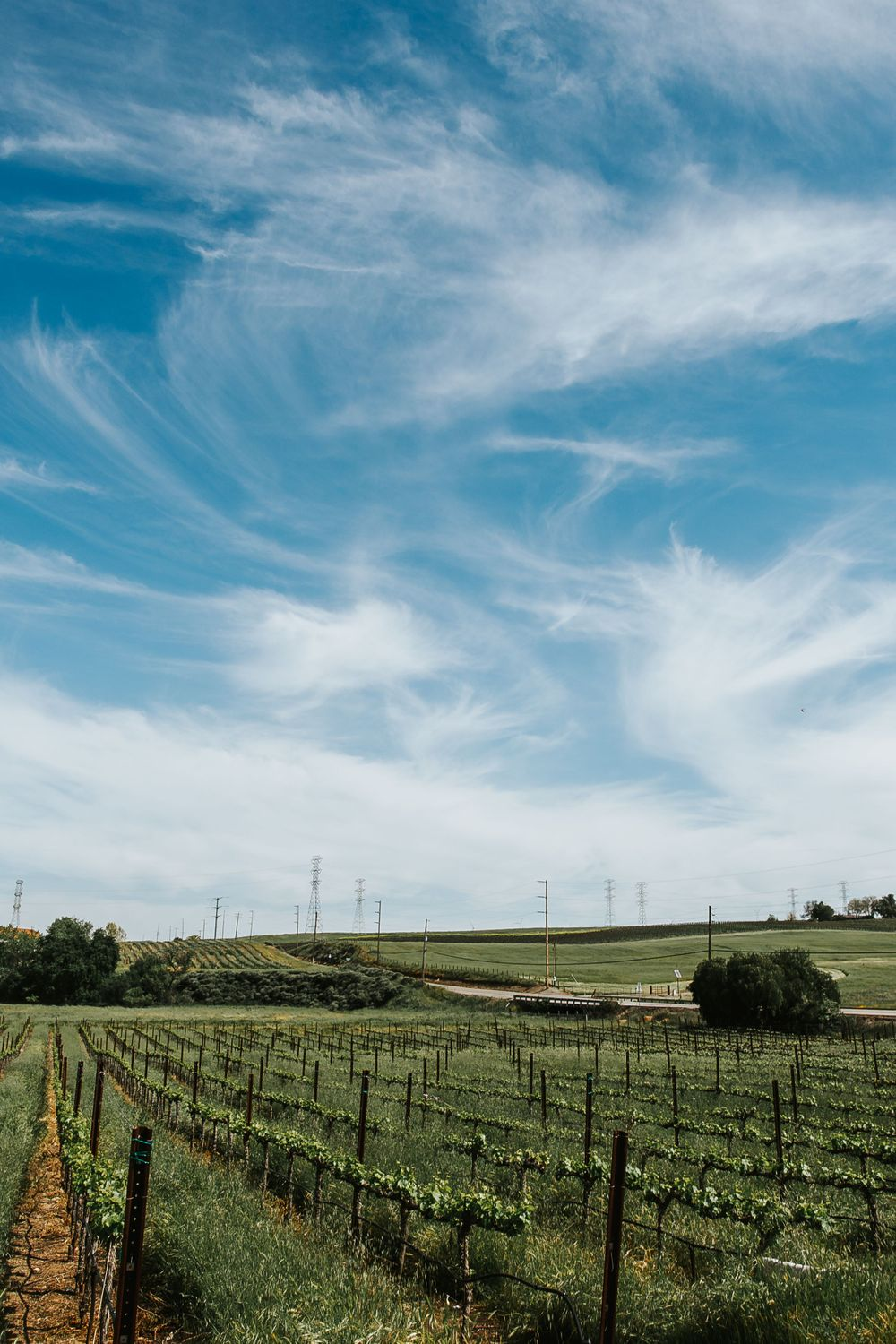 rebecca skidgel photography garre winery indian wedding california blue skies and vineyards