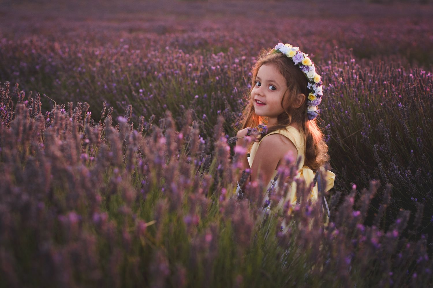 Hitchin Lavender Photo sessions