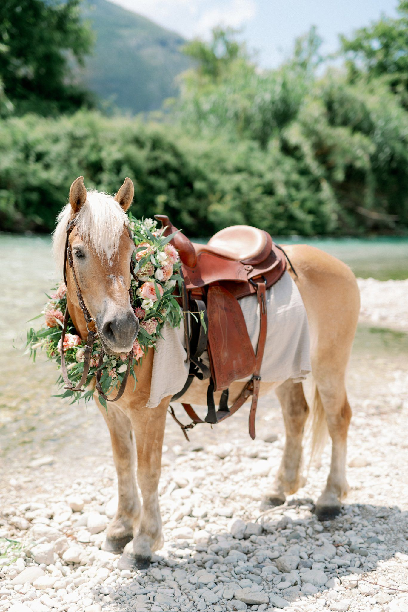 horse in acheron river greece