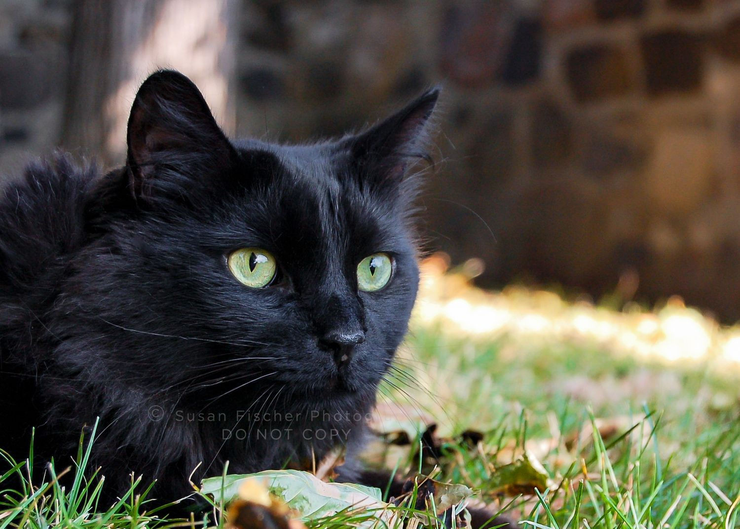black cat with green eyes lying in grass and leaves