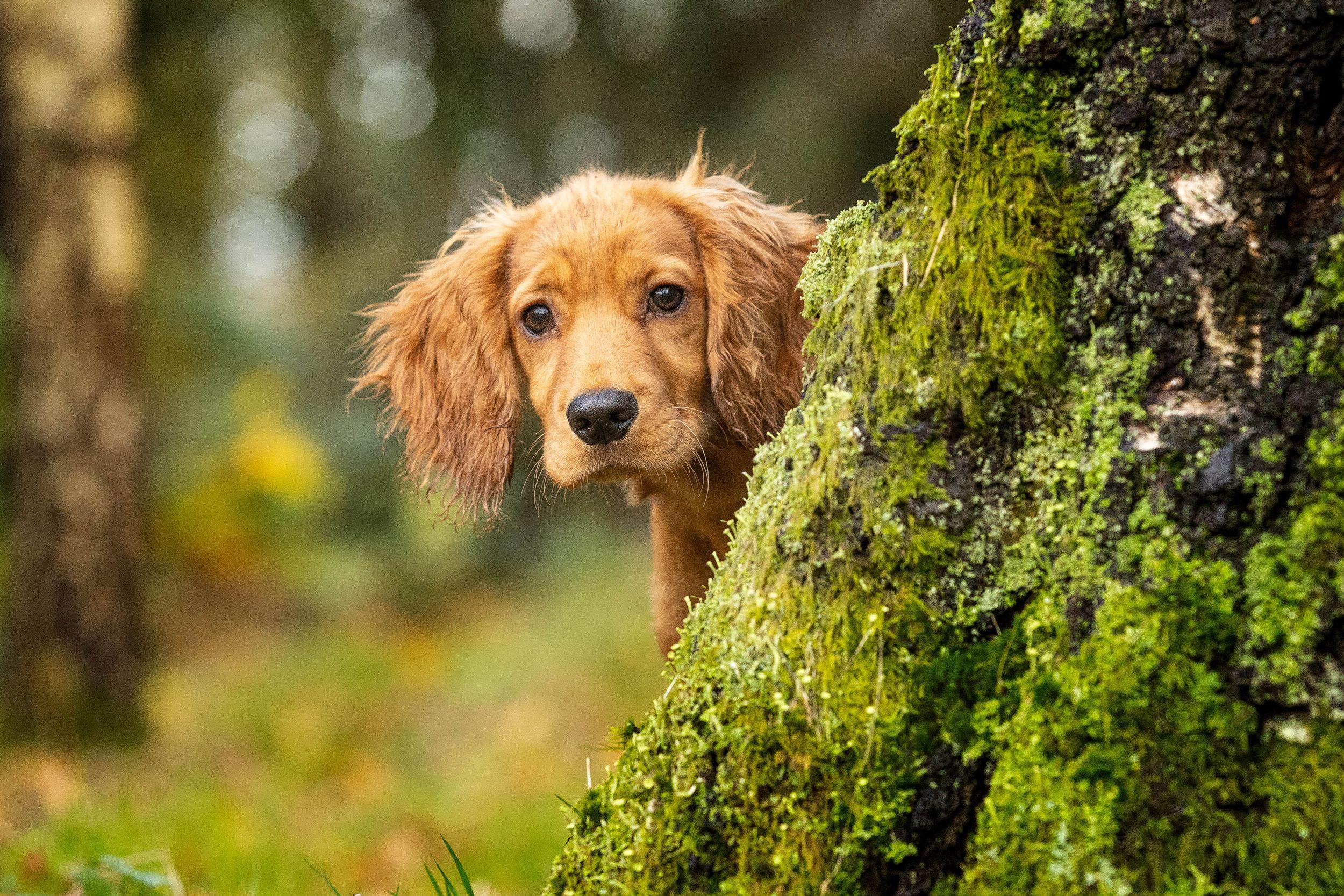 Dog Photographer Lancashire Cumbria Pjl Pet Photography