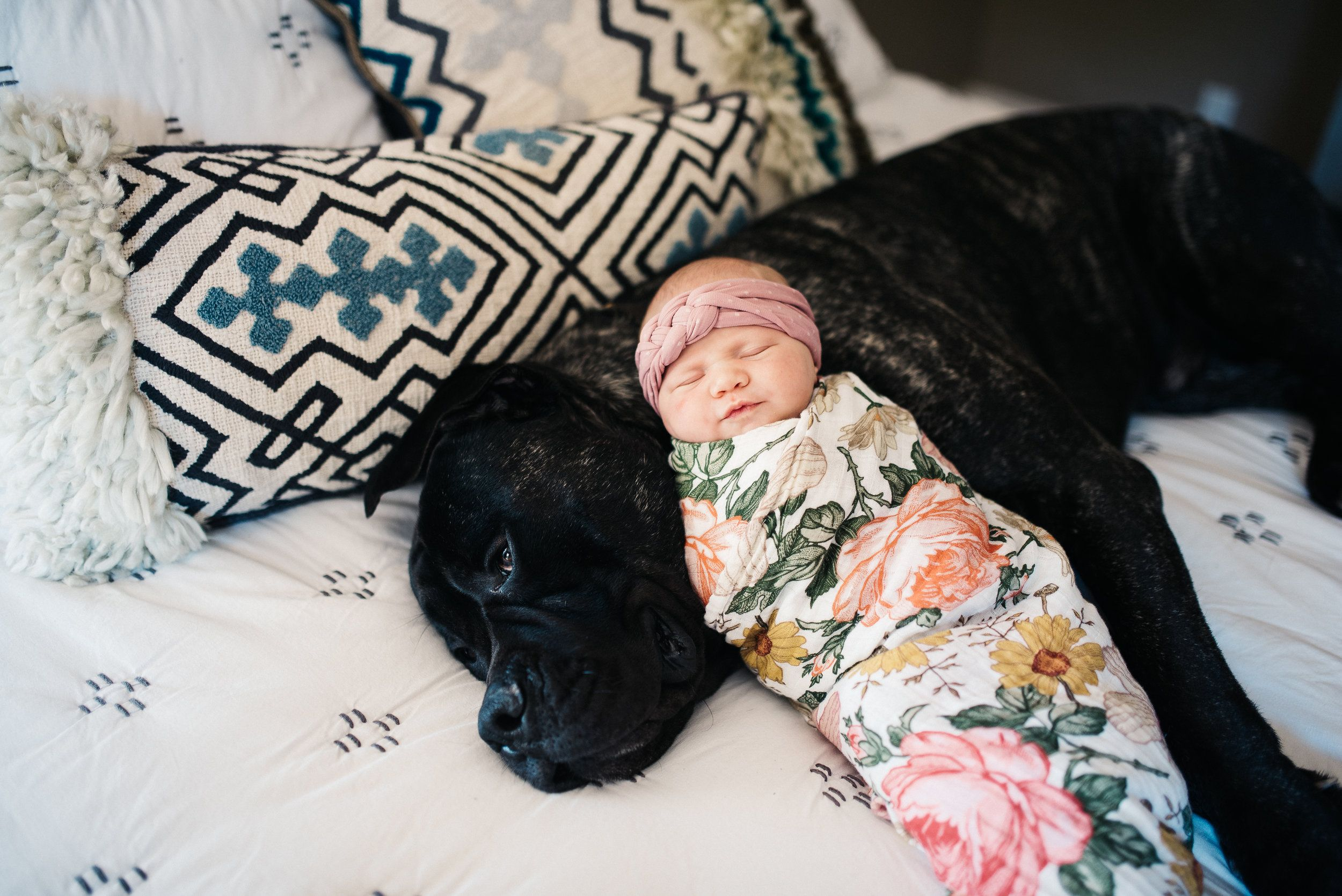 Newborn baby sleeping on top of the family dog on the bed during an in-home newborn photo session in Reedley, California