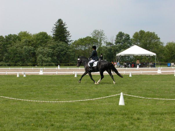 Sport Horse Photographer Kate Lussier at a dressage show