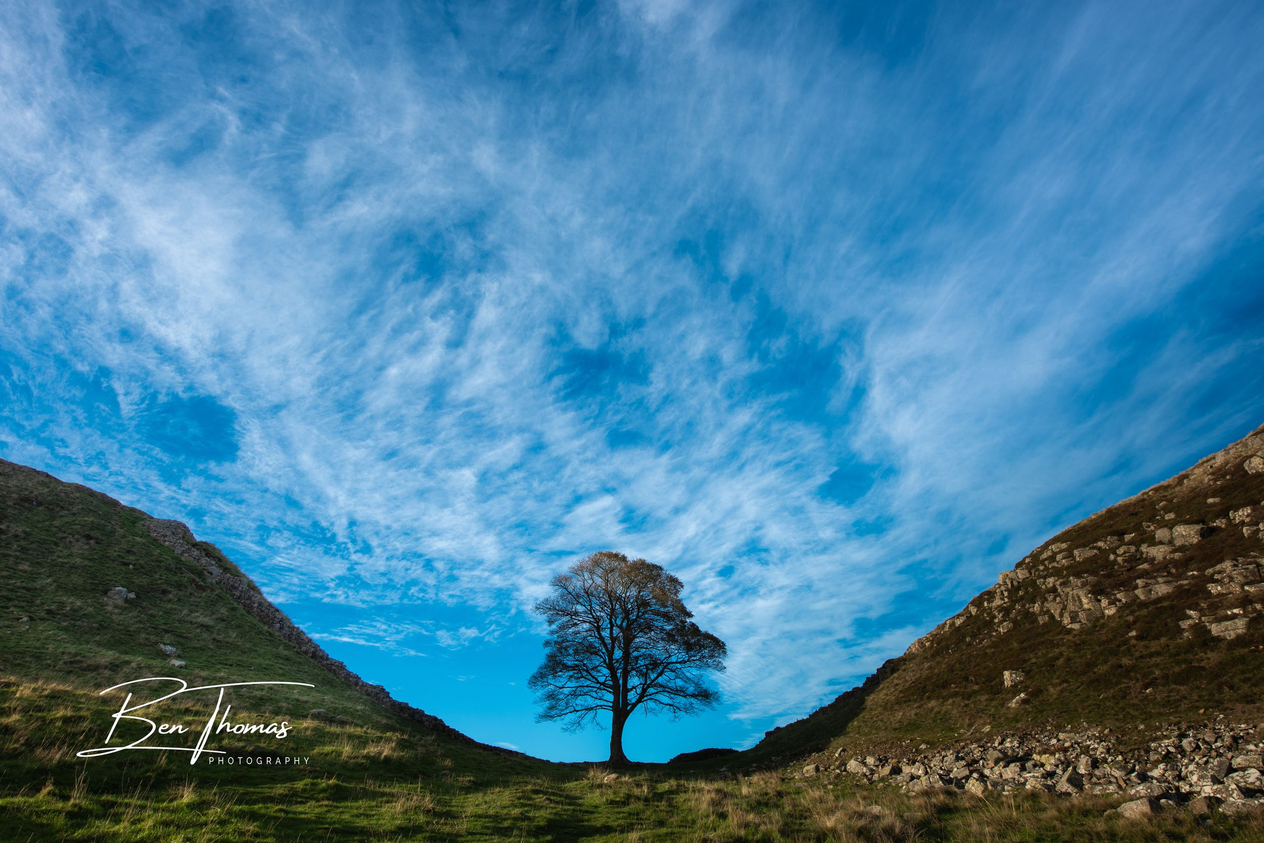 Sycamore Gap Northumberland Tree