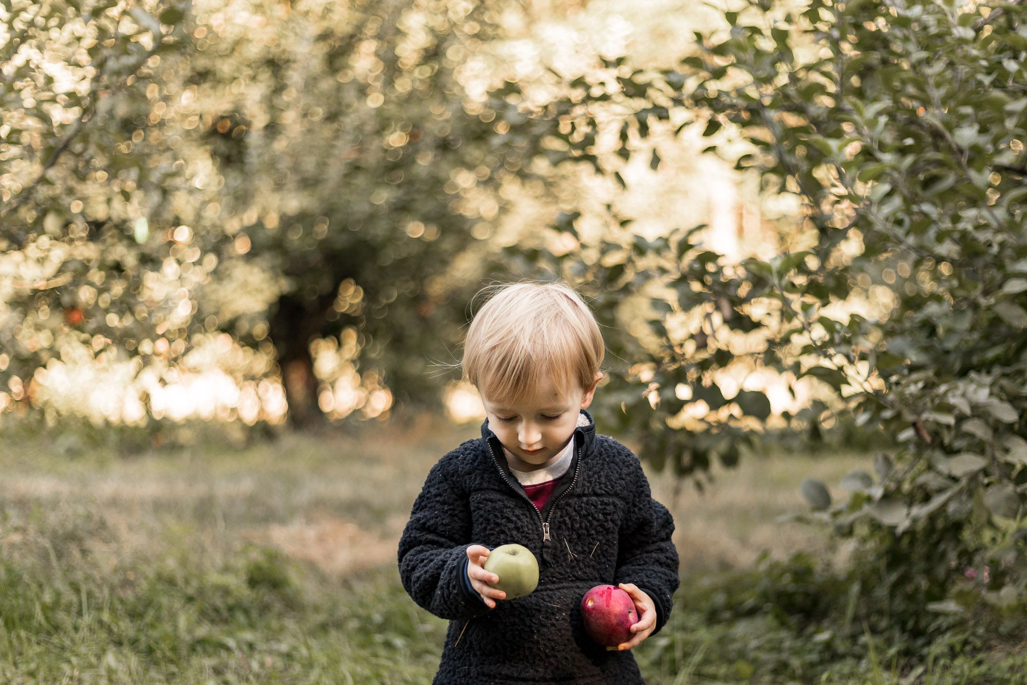 Child apple picking at DeVylder Farm in Wolfeboro New Hampshire