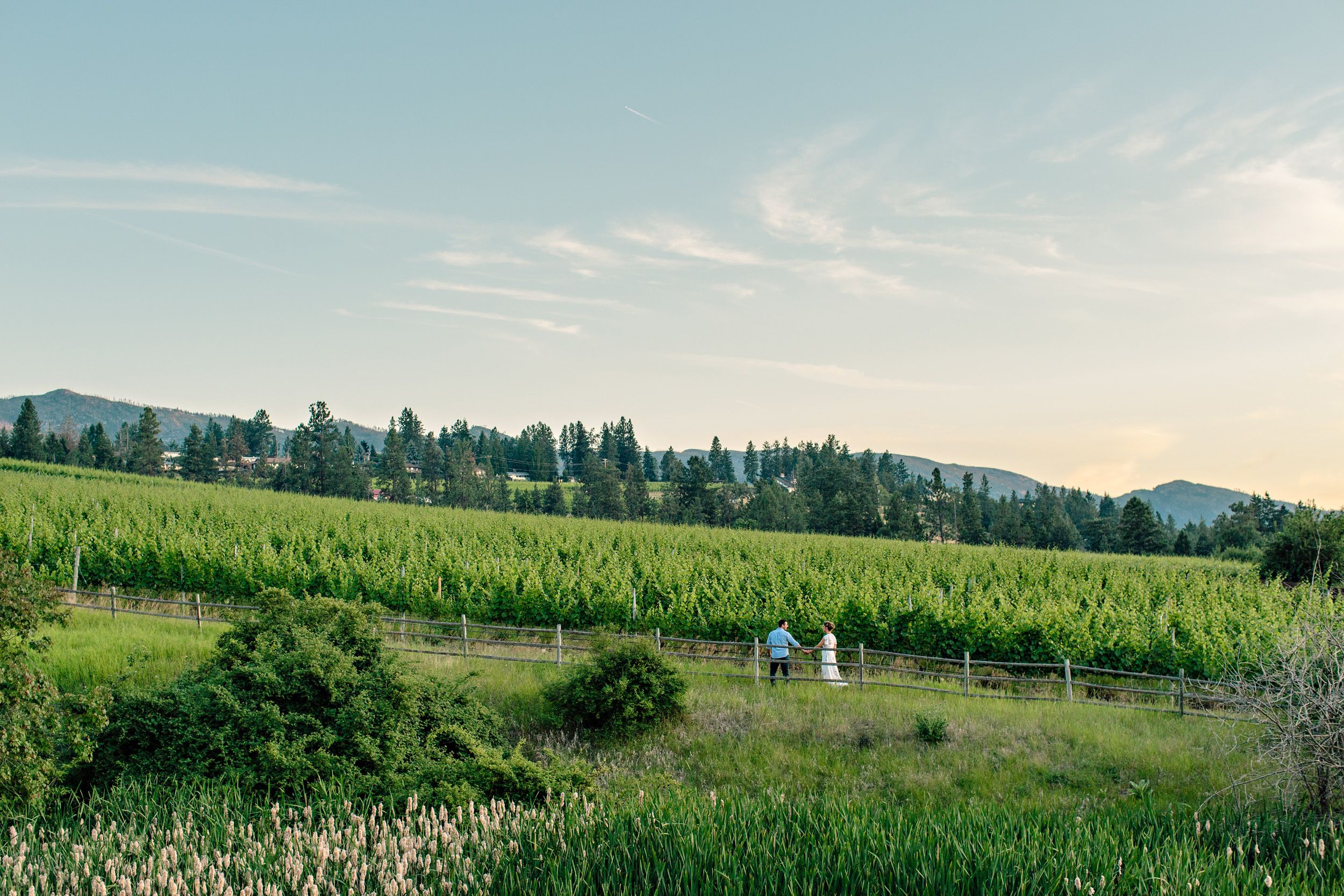 summerhill winery engagement