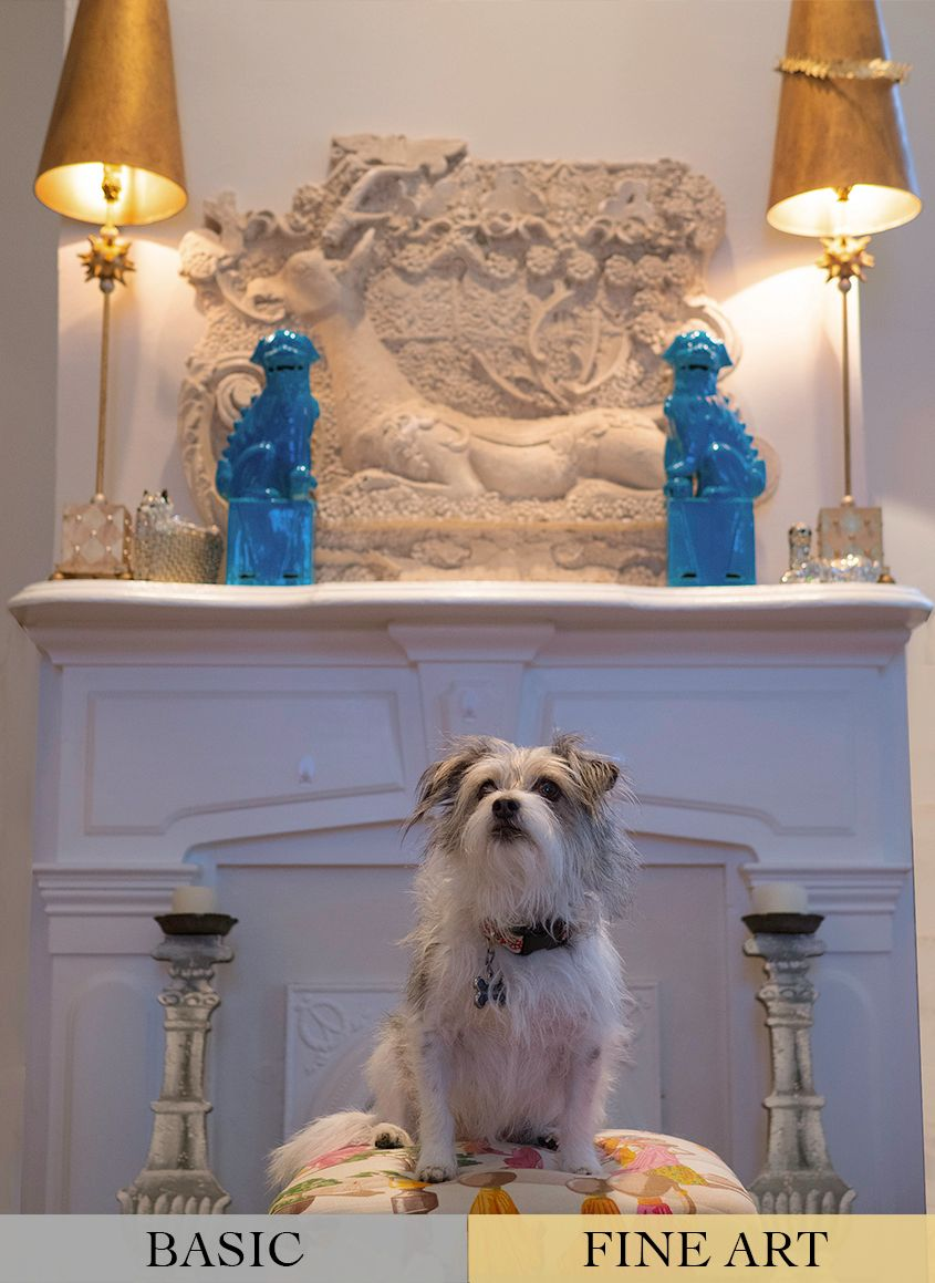Grey and White Terrier Dog in Living Room by Zurich Photographer Leslie Argote