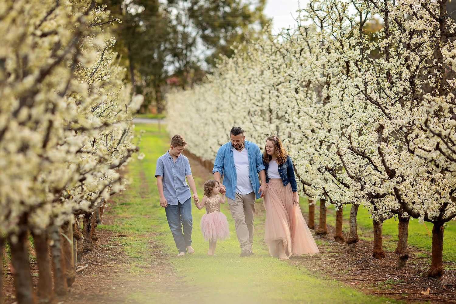 A Perth family walking amongst the white blossoms for a photo shoot
